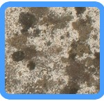 Water-Mold-Removal-south-san-francisco