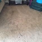 south-san-francisco-Dirty-Carpet